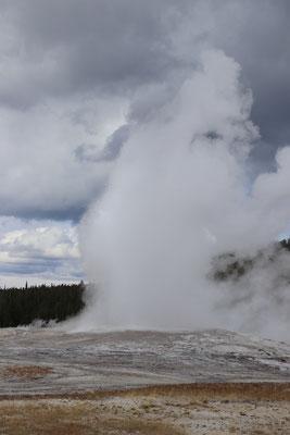 Eruption des Old Faithful (alle 60min.)