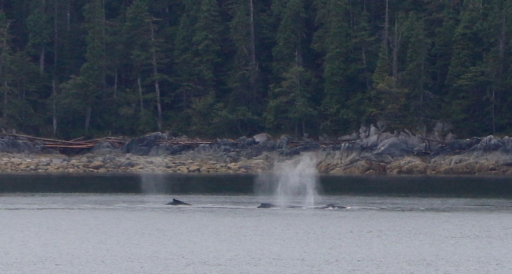 Whales close to shore