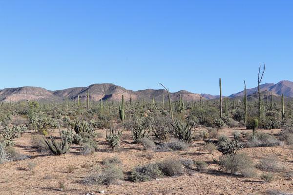 Dry Landscape of Baja California