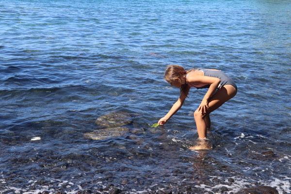 Lynn feeding green turtles some leaves she found in the sea