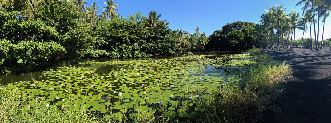 a beautiful pond just behind Punalu'u Black Beach