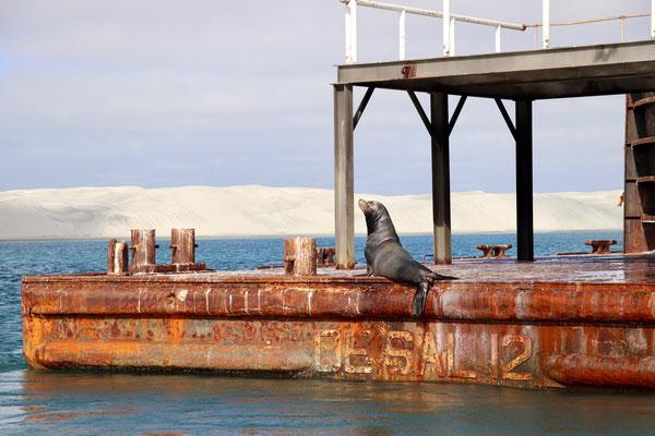 ..on a Hugh salt barge