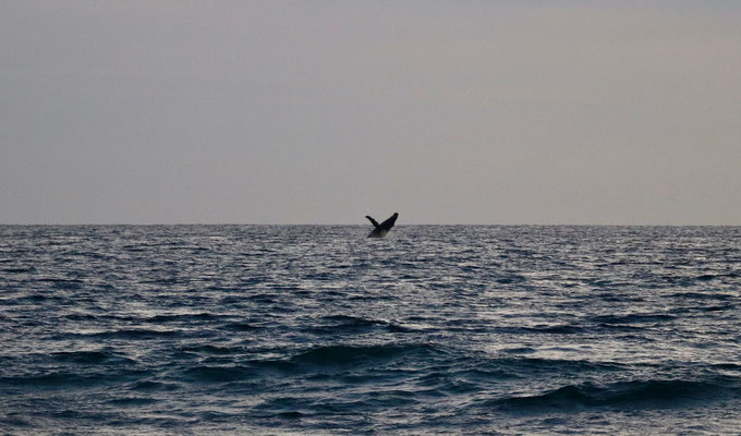 ..at the same time we saw a whale..