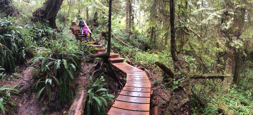 Spaziergang bei Regenwetter durch den Regenwald