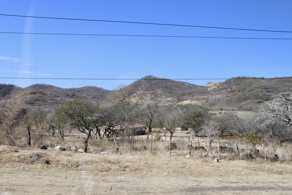 The south coast vegetation was very dry as we were in the middle of the dry season