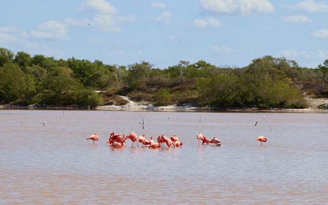...we went to the pink lagoons and yes it is true that's why the Flamingos are pink..
