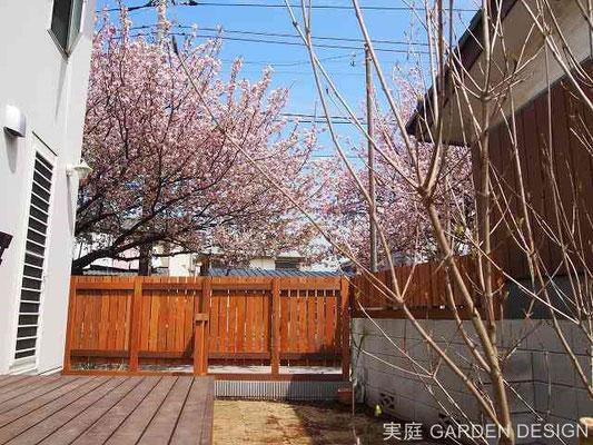 街路樹の桜並木に映えるウッドフェンスです