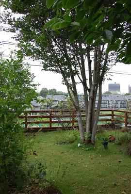 大きな樹木とシンプルなローフェンスとの組み合わせ