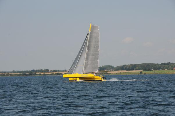 Flexodus , Trimaran, gelb, D71 M