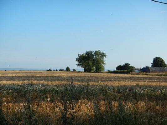 über die Felder von  Endelave