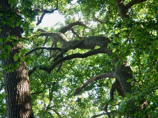 Baumstämme neigen sich ebenfalls gen Wasser