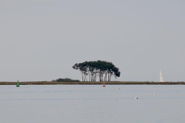 Die unverkennbare Baumgruppe