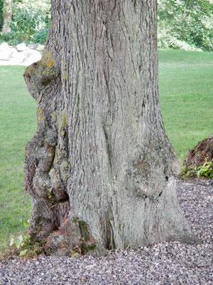 Da lehnt doch einer am Baum