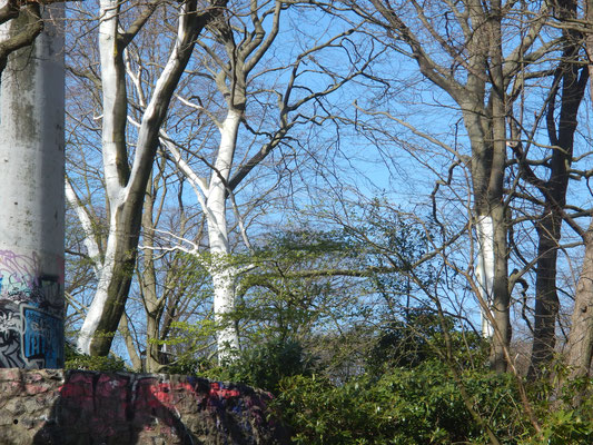 Antifouling ? für Bäume