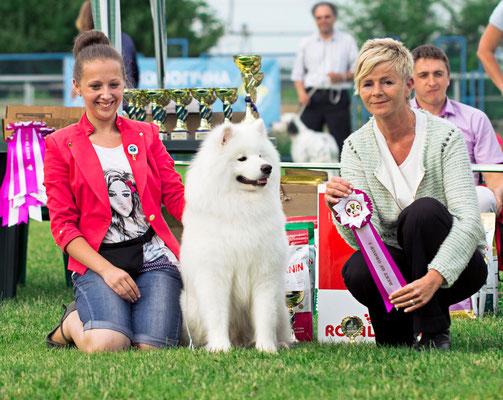 самоед победитель группы на выставке собак