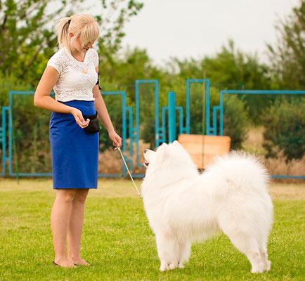 хозяин и самоед на выставке собак