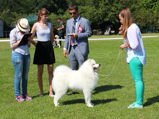 эксперт Vojislav Al-Daghistani оценивает собаку