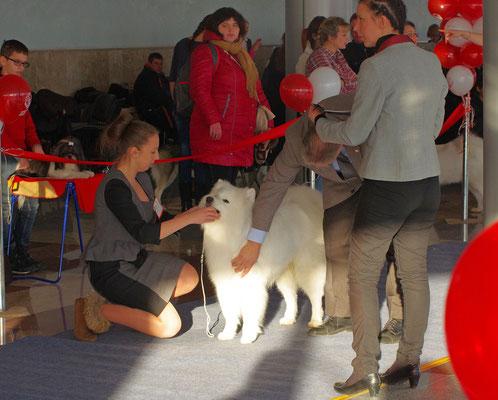 эксперт ощупывает собаку на выставке