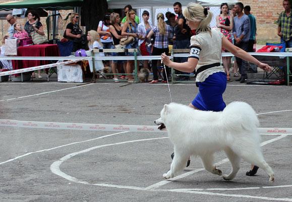 показ собаки на выставке