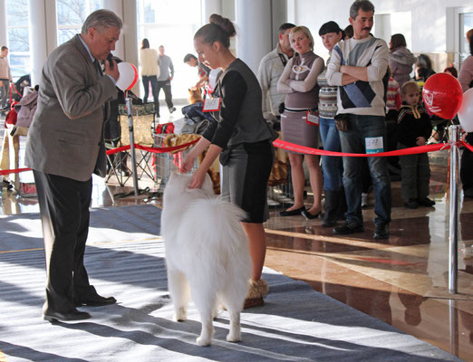 оценка собаки на выставке