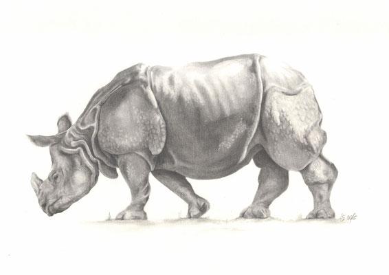 Nashorn / Bleistiftzeichnung / Bildgröße ca. 30x40