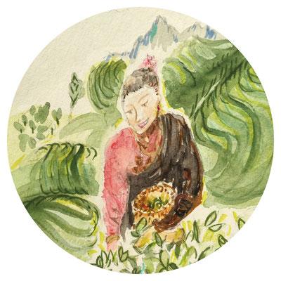 La cueilleuse de thé, aquarelle