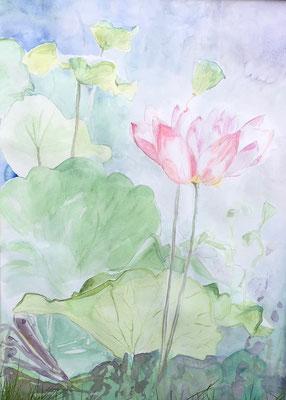 Fleur d'Eau, Aquarelle 50x70