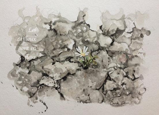 Les Cailloux sont en fleur, Aquarelle, 20X30 DISPONIBLE