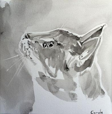 Chat à l'Affût, Aquarelle 20x20