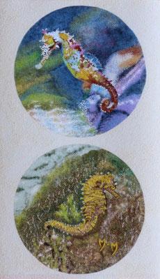 L'Hippocampe - 25 x 43 - À VENDRE