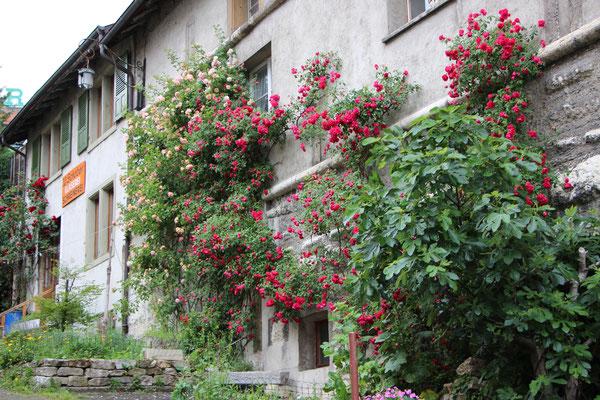Rosenwand am Zehntenhaus