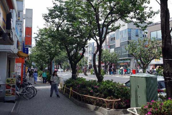 サザエさんとともに八重桜の並木が有名な桜新町駅前通り