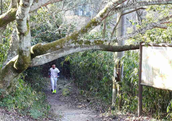 最後に、この大木をくぐり抜けるとゴールです。