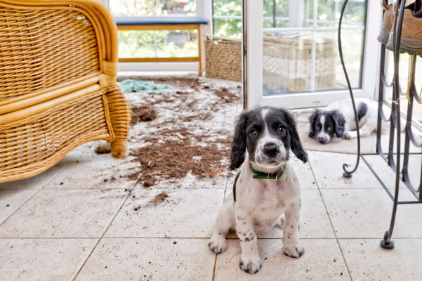 Try as they might, puppies can't ruin your tile.