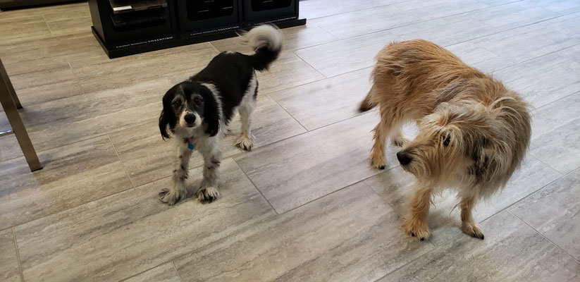 These two old friends like to track mud all over the floor. Fortunately, tile is easy to clean.