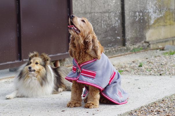 Algothérapie pour chien