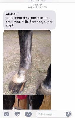 Produit Florènes de récupération des tendons et soin des molettes pour les chevaux (astringent, anti-inflammatoire, drainant des membres) remplace l'argile