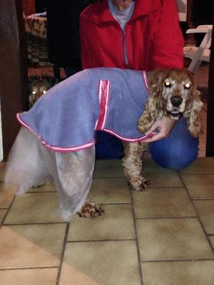 Algothérapie canine