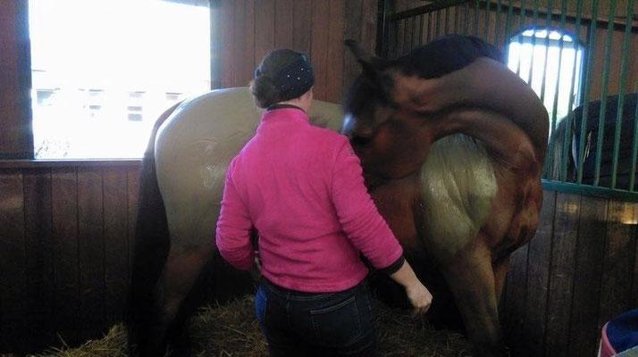 algothérapie cheval