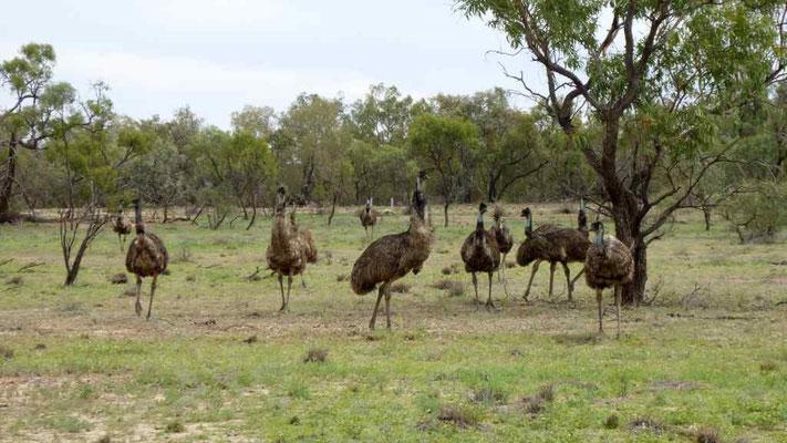 Emugruppe
