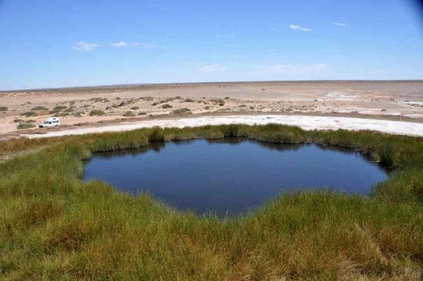 Wasser in der Wüste (Quelle) Oodnadatta-Track