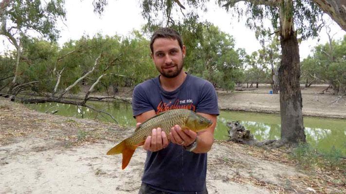 Fisch gefangen (Karpfen)