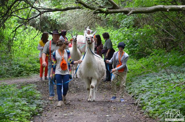 Ferienfreizeit in Herbsleben mit den Unstrut Lamas