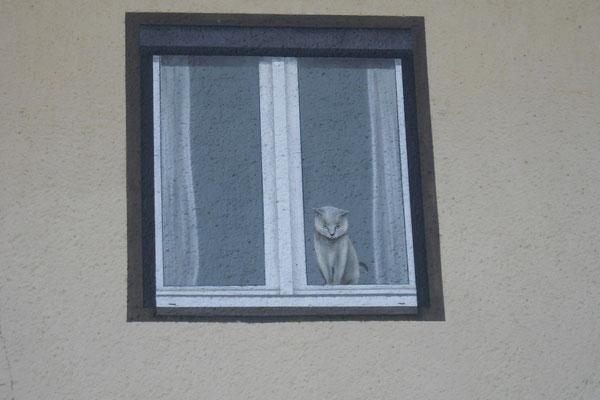 Unsere Katzenpension Außenansicht