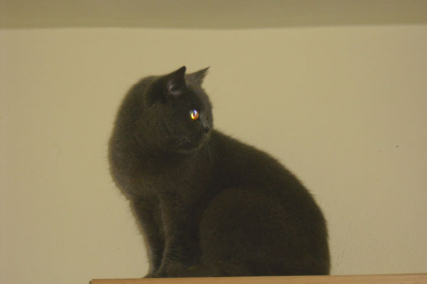 Katze mit adligem Namen  - Sir Winston