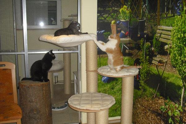 spielende Katzengruppe