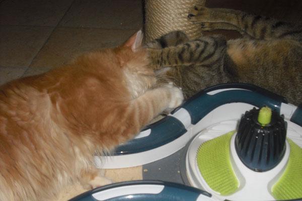 Edgar und Bobby haben sich in der Pension gefunden und spielen gemeinsam