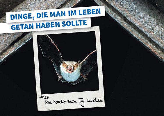 Mitmachen - Fledermäuse schützen!