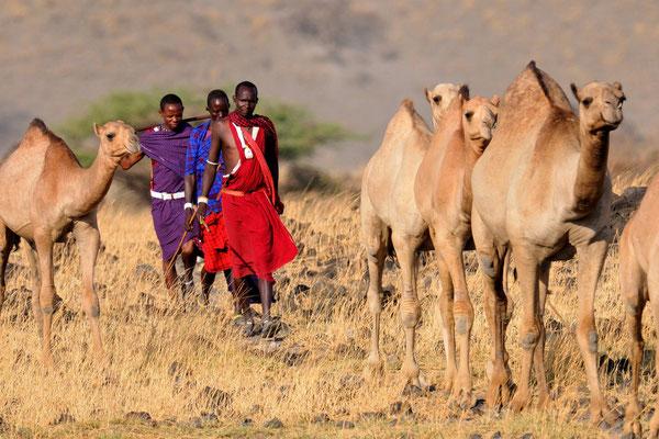 Masai Karavane am Oldonyo Lengai (Tansania)
