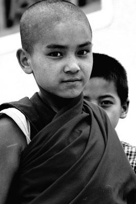 junger Trabant im Kloster Shey, Ladakh (Kaschmir)